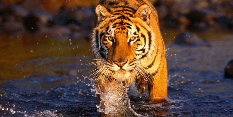 Jungle Safari In Chitwan National Park Exciting Nepal